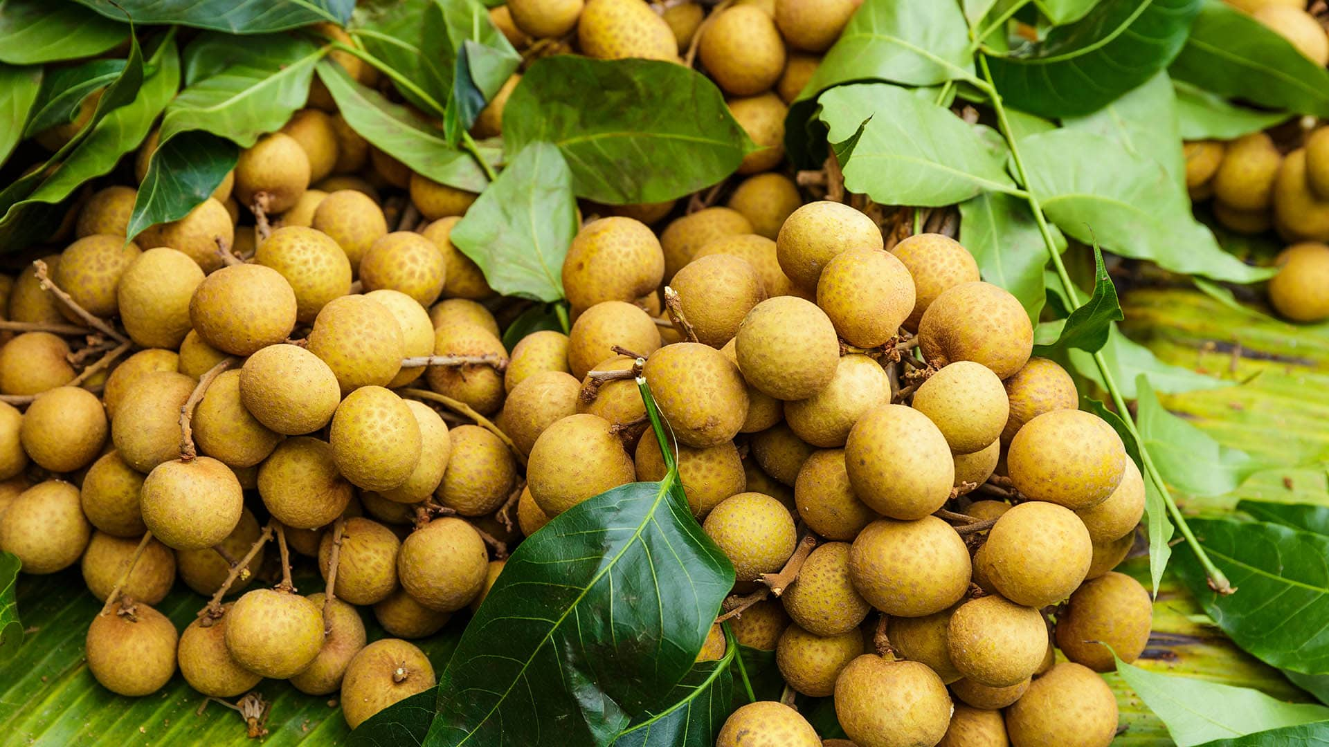Longan Früchte in Thailand