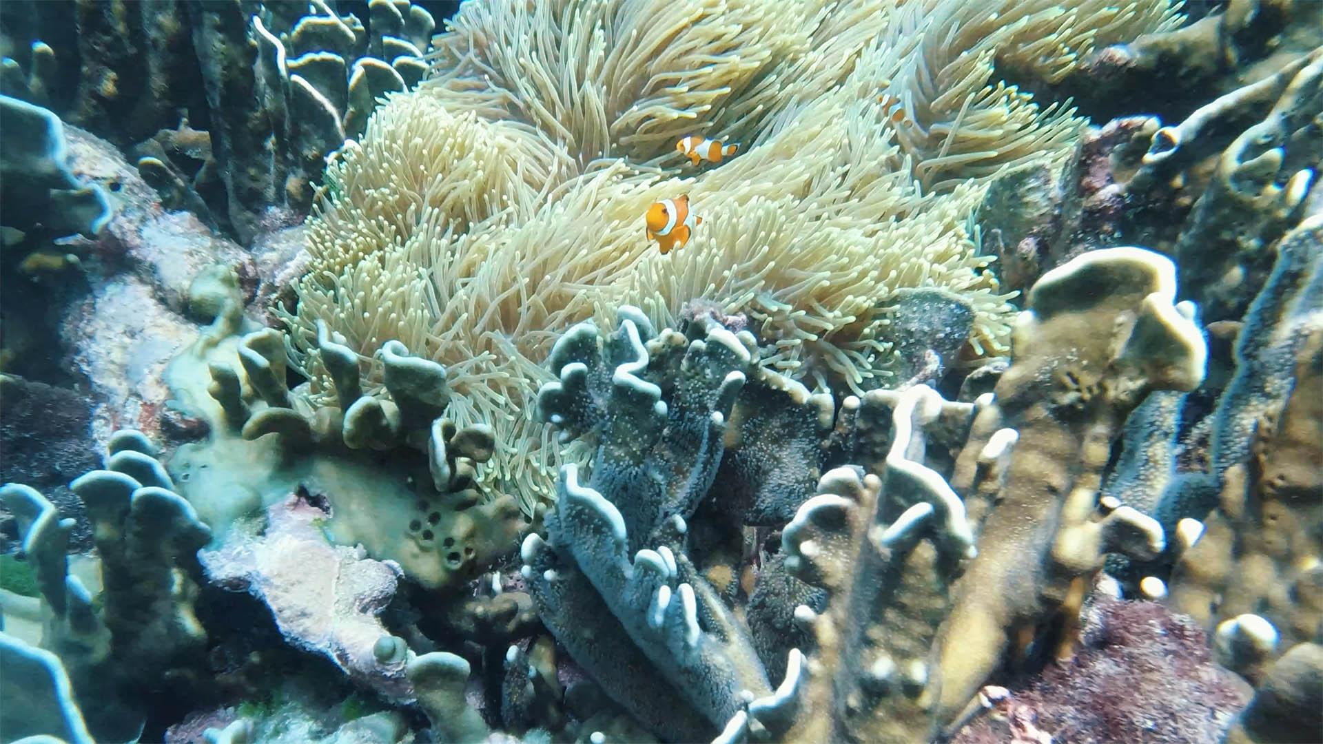 Similan Islands Schnorcheln